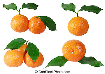 Tangerine Collection