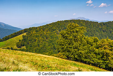 forest on hills of mountain ridge in autumn - forest on...