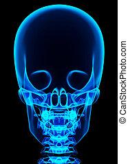3D illustration of shiny blue skeleton system. - 3D...