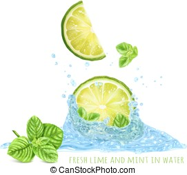 Fresh mint and limes in water splash. Vector illustration.