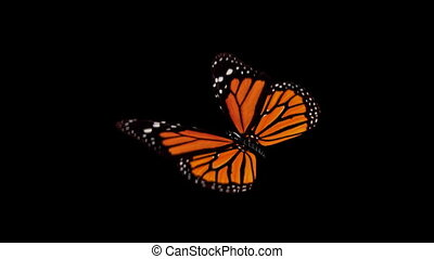 Butterfly animation.