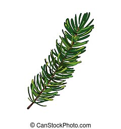 Hand drawn fir tree twig, branch, spruce