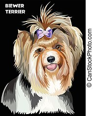 Colorful Biewer terrier vector image - Vector Portrait of...