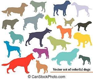 vector, Siluetas, Conjunto, Perros, colorido