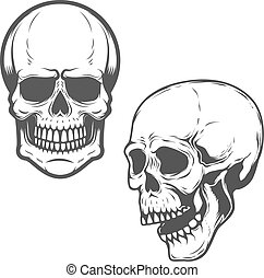 Set of the vector skulls isolated on white background. Vector de