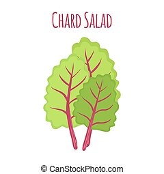 Chard salad, leaf of swiss plant, vegetarian nutrition....