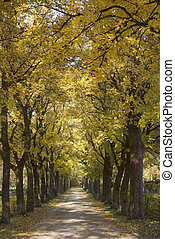Tree Lined Country Road with Colorful Autumn Scenery