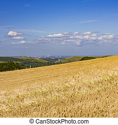Ripe golden wheat field with Corfe Castle in the distance -...