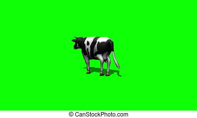 cow goes - green screen 2