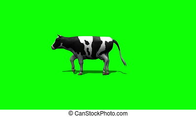 cow goes - green screen 3