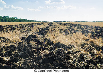 Plowed field furrows after wheat. Agricultural Background