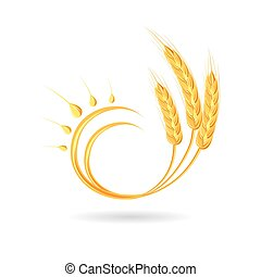Wheat spikelet. Agricultural wheat, symbol, isolated on...