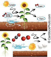 Diagram showing how plant grows illustration