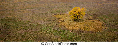 October Aerial Earth Tones. - Aerial view of a Cottonwood...