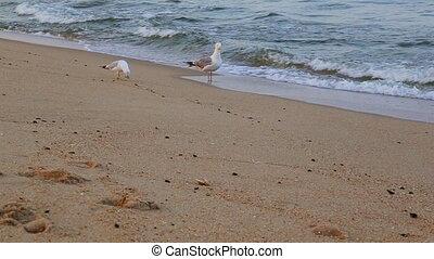 Seagul blue ocean. A gull flies over the blue ocean