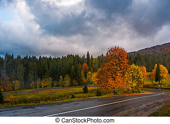 colorful foliage on serpentine in rainy fall weather....
