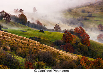 thick fog on hilly rural fields in autumn. overwhelming...