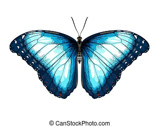 Single Blue Butterfly morpho on a white background.