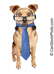 Business Dog wearing glasses tie isolated