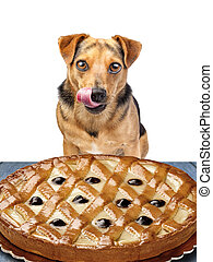 little dog looking delicious pie licking chops isolated