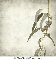 textured old paper background with Eucalyptus globulus...