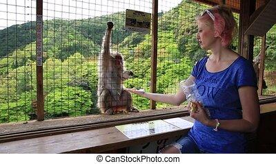 Woman feeding monkey - Young happy woman feeding with fresh...