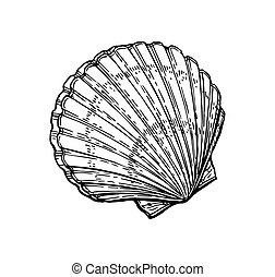 Scallop ink sketch. - Scallops ink sketch. Isolated on white...