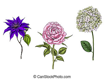 Set with rose, clematis and phlox flowers, leaves and stems...