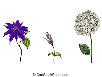 Set with phlox, clematis and bud eustoma flowers, leaves and...
