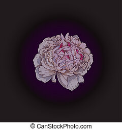 Hand drawn gently pink peony bud isolated on black background. Botanical