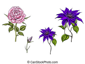 Set with clematis and rose flowers, leaves, bud and stems...