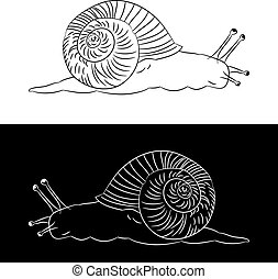 Silhouette of a snail on white and black background.