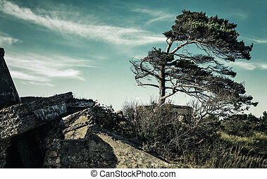 Demolished military forts in Liepaja, Latvia with pine trees...