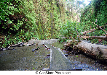 fern canyon trail - hiking through fern canyon