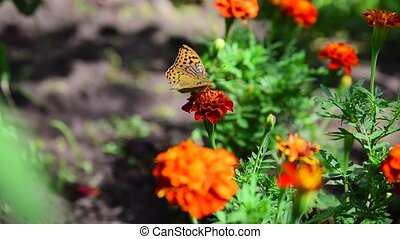 Butterfly on a flower close up