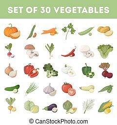 Vegetables illustration set.