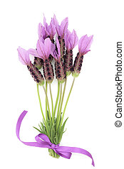 Lavender Herb Flower Posy - Lavender herb flower posy tied...