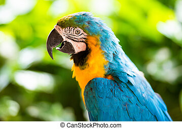 Parrot macaw, closeup on a green background