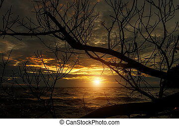 Sunset in the monsoon season - Black silhouette of branches...