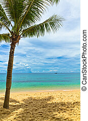 Sand beach with palm in Phu Quoc close to Duong Dong, Vietnam
