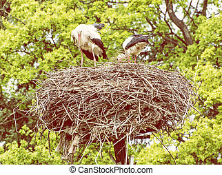 Family of White stork in the nest, photo filter - Family of...