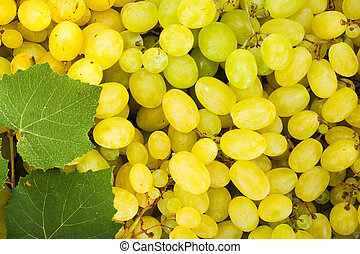 White grape berries (Vitis) background with leaves