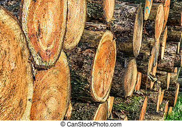 chopped trees wood - Chopped tree logs on a woodpile for the...