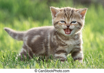 Little cat meowing in green grass