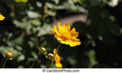 Beetle did not like yellow flower. Beautiful spring nature...