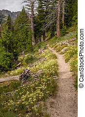Wild flowers line a hiking trail in the rugged Idaho...