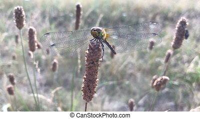 cute Dragonfly sitting in the summer field Ladybird on a...