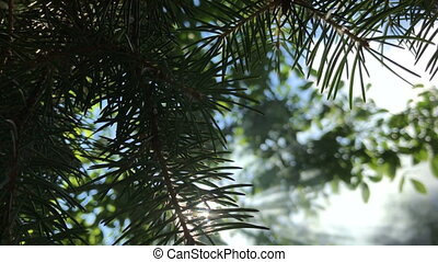 green branches against a backdrop of white smoke close-up -...
