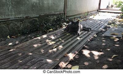 big fluffy grey cat lies in the shadows in the street