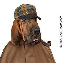 Bloodhound dog with a pipe